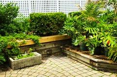 ogrodowy zielony bujny obrazy stock