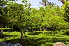 ogrodowy zielony pogodny tropikalny zdjęcie stock