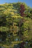ogrody botaniczne Fotografia Royalty Free