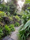 ogrody botaniczne Zdjęcie Stock