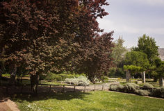 ogrody botaniczne Obraz Royalty Free