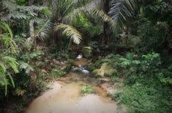 ogrody botaniczne Penang Obraz Royalty Free