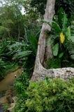 ogrody botaniczne Penang Obrazy Royalty Free