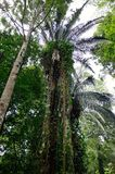 ogrody botaniczne Penang Fotografia Stock