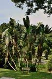 ogrody botaniczne Penang Obrazy Stock