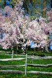 Ogrodzenia kwiatonośnego drzewa zamazany tło obraz stock