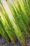 ogrodzenia uprawiają ogródek zielonej rośliny Fotografia Stock