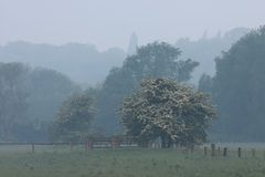 ogrodzenie 2 drzewa Fotografia Royalty Free