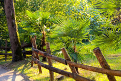 Ogrodzenie i drzewka palmowe Obrazy Royalty Free
