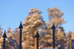 Ogrodzenie i las Zdjęcie Stock