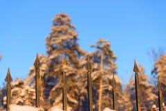 Ogrodzenie i las Zdjęcie Royalty Free