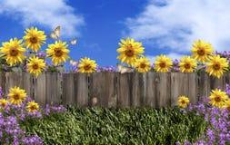 Ogrodzenie Kwitnie niebieskie niebo Zdjęcie Stock