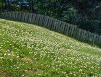 Ogrodzenie między trawą i drzewami Zdjęcia Stock