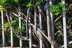 Ogrodzenie od drzewnych bagażników zdjęcia royalty free
