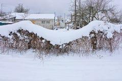 Ogrodzenie od siatki przerasta z roślinnością pod snowdrift Obrazy Stock