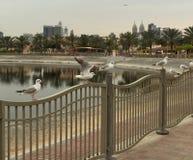 ogrodzenie umieszczający seagulls Zdjęcia Royalty Free