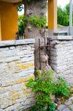 Ogrodzenie w drzewie zdjęcia royalty free