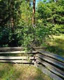 Ogrodzenie w lesie Zdjęcie Royalty Free