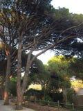 Ogrodzenie wzdłuż drzewo prążkowanego pasa ruchu obrazy stock
