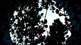 Ogromna Błękitna księżyc w gałąź zbiory wideo