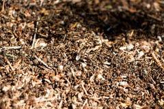 Ogromna liczba mrówki w anthill Obraz Royalty Free