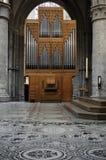 ogromna organowa drymba Obrazy Stock