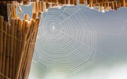 Ogromna pająk sieć na płochach zdjęcie stock