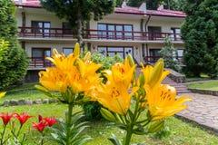 Ogromne kwitnące żółte i czerwone leluje przeciw tłu hotelowy kompleks zdjęcia stock