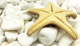 Ogromnego oceanu shellfish zbliżenia denny biel na kamienia perspektywicznym zdroju relaksuje sezonu wakacje Zdjęcie Stock