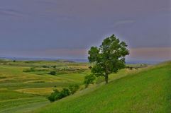 Ogromni obrzary pszeniczni pola i drzewo Obraz Royalty Free