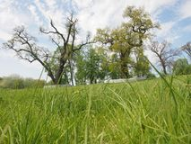 Ogromni starzy drzewa w parku Obraz Stock