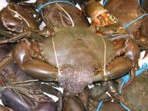 Ogromny borowinowy krab dla sprzedaży w Rybim rynku fotografia stock