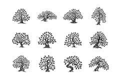 Ogromny i święty dębowego drzewa rośliny sylwetki logo odizolowywający na białym tło secie ilustracji