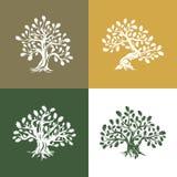 Ogromny i święty dębowego drzewa sylwetki logo na tle ilustracja wektor