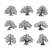 Ogromny i święty dębowego drzewa sylwetki logo odizolowywający na białym tle royalty ilustracja