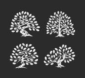 Ogromny i święty dębowego drzewa sylwetki logo odizolowywający na ciemnym tle ilustracja wektor