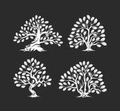 Ogromny i święty dębowego drzewa sylwetki logo odizolowywający na ciemnym tle royalty ilustracja