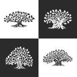 Ogromny i święty dębowego drzewa sylwetki logo odizolowywający na tle ilustracji