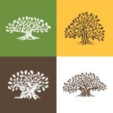 Ogromny i święty dębowego drzewa sylwetki logo odizolowywający na tle ilustracja wektor