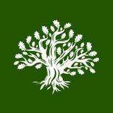 Ogromny i święty dębowego drzewa sylwetki logo odizolowywający na zielonym tle ilustracji