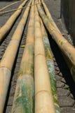 Ogromny i przygotowany dla budowa żółtych bambusowych bagażników umieszczających na ziemi fotografia royalty free