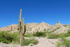 Ogromny kaktusowy dorośnięcie w Ameryka Południowa suchych górach altiplano ilustracji