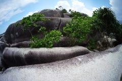 Ogromny koral przerastający asortowanymi roślinami z błękitnymi jaskrawymi nieba i bielu chmurami obrazy royalty free