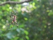 ogromny pająk zdjęcia stock