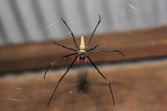 Ogromny pająk na sieci zdjęcia royalty free