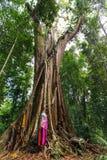 Ogromny tropikalny drzewo Obraz Stock
