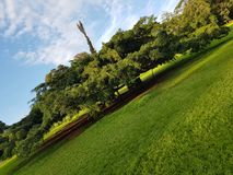 Ogromny tropikalny drzewo rozprzestrzenia za nadmiernym wiele metry obraz royalty free
