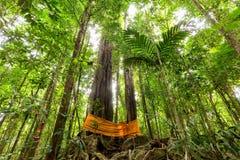 Ogromny tropikalny drzewo w tropikalnym lesie deszczowym Zdjęcia Stock