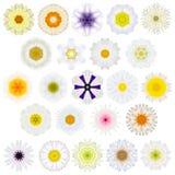 Ogromny wybór Różnorodni Koncentryczni mandala kwiaty Odizolowywający na bielu Fotografia Stock