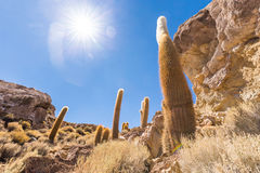 Ogromnych kaktusa Salar De Uyuni wyspy gór sceniczny krajobraz Fotografia Stock